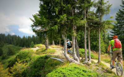 Mountain Biking In The Alps, Everything You Need To Know